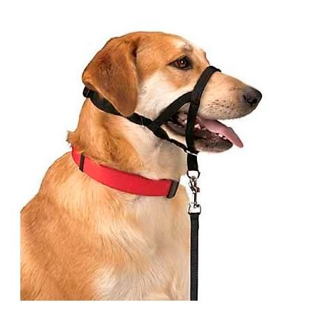 Bozal dog control