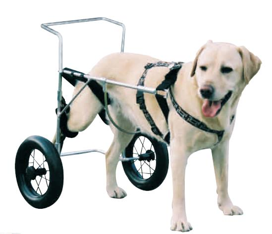 silla ruedas perro