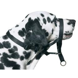 Moly Dog Control, bozal y collar integrado