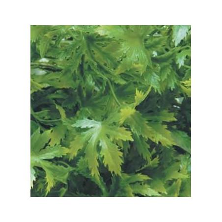 Planta Cannabis Artificial