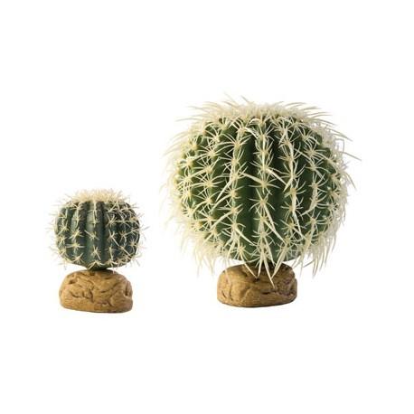 Cactus barril