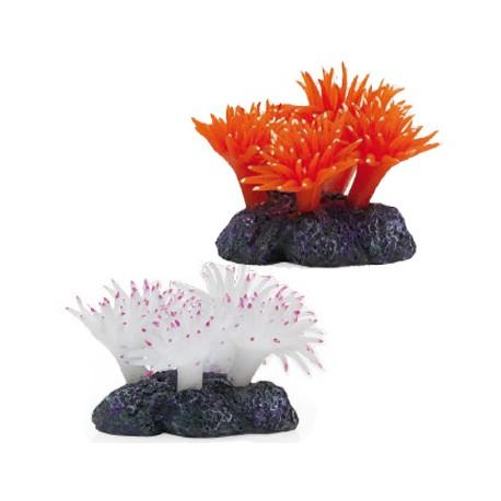 Coral Blando Corneados Para Acuarios