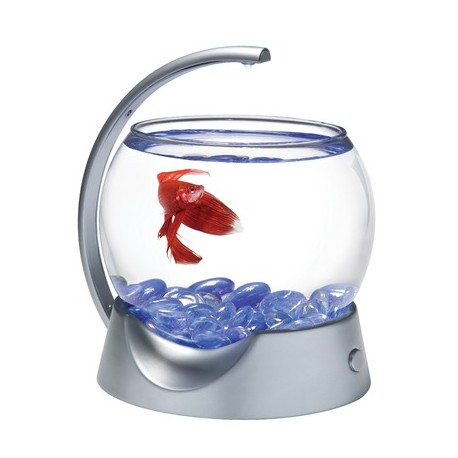 Mini acuario Betta Bowl