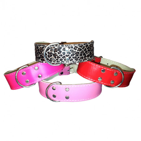 Collar Bulldog