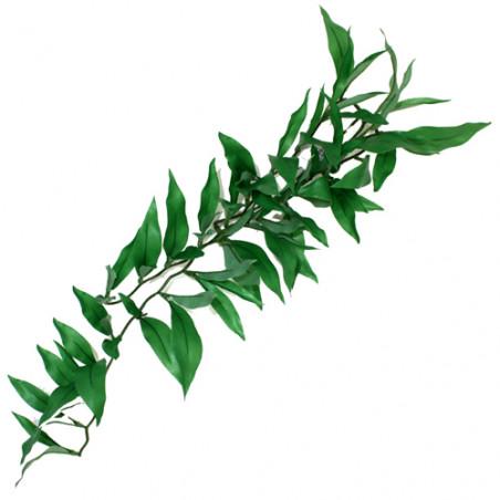 Planta Colgante Terrario Ruscus Silk