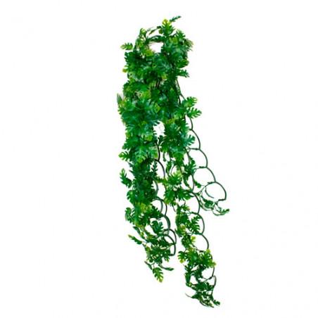 Planta Colgante Terrario Philodendron