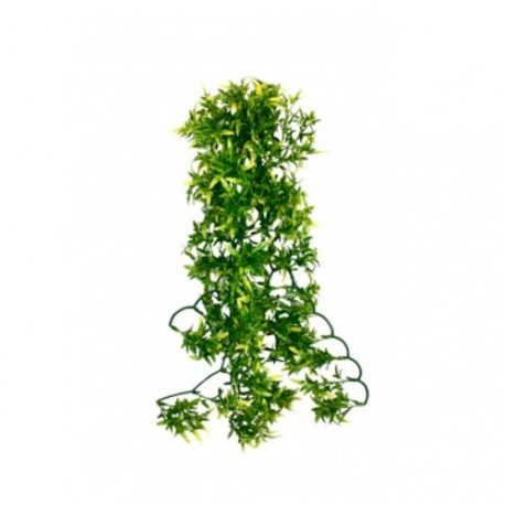Planta Colgante Terrario Croton