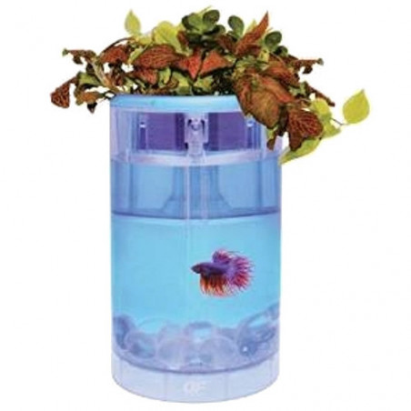Betta Flora OF Ocean Free Con Led