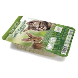 Hierba natural para gatos y roedores