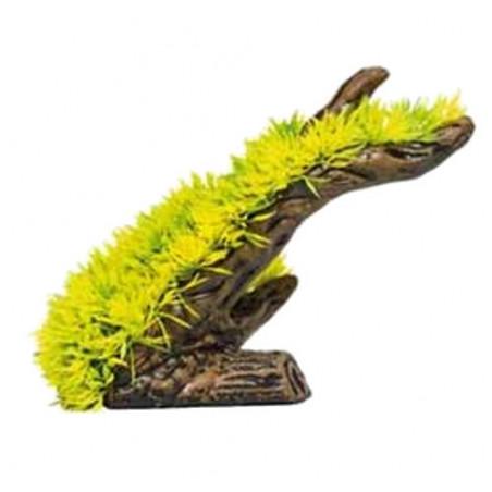 Lilaeopsis Amarilla planta decoración acuarios