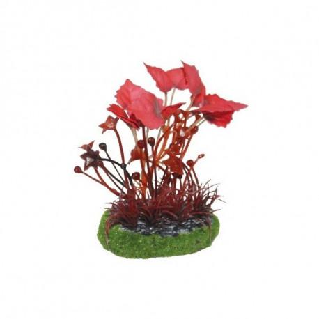 Planta Rotala Roja para acuarios