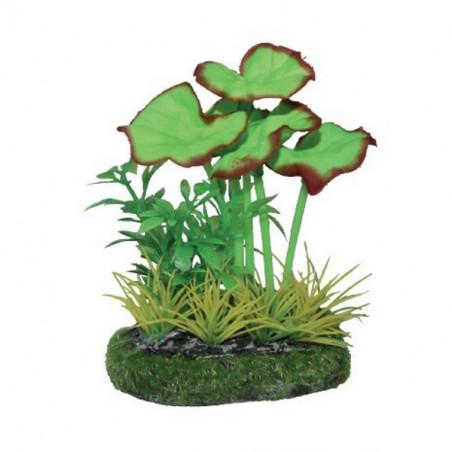 Planta Rotala Verde para acuarios