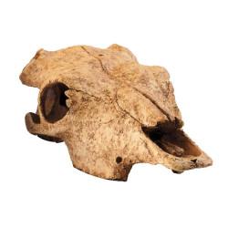 Figura Buffalo Skull para Terrarios