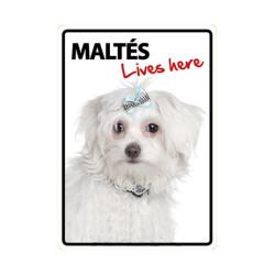 Placa Flexible Maltés vive aqui