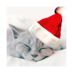 Tarjeta De Navidad De Gatito Durmiendo Con Gorro
