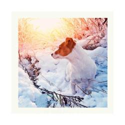 Tarjeta Felicitación Jack Russel En La Nieve