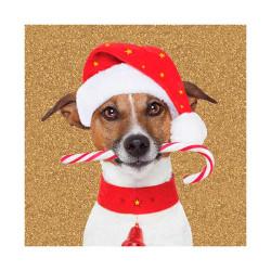 Tarjeta De Navidad Jack Russel Con Caramelo