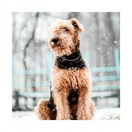 Tarjeta Felicitación Airedale Terrier En La Nieve