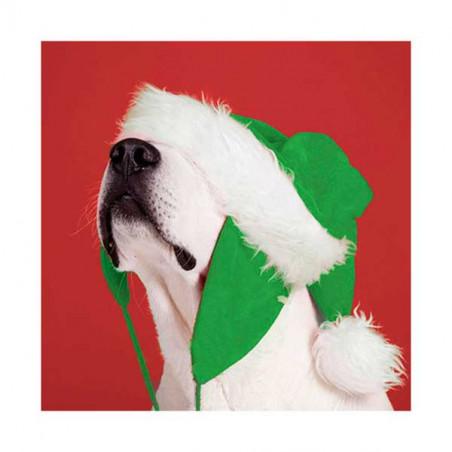 Tarjeta De Navidad Labrador Con Gorro