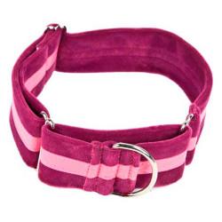 Collar Regulable Ascott Para Galgo