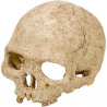 Figura Primate Skull para Terrarios