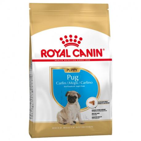 Royal Canin Carlino (Pug) Junior