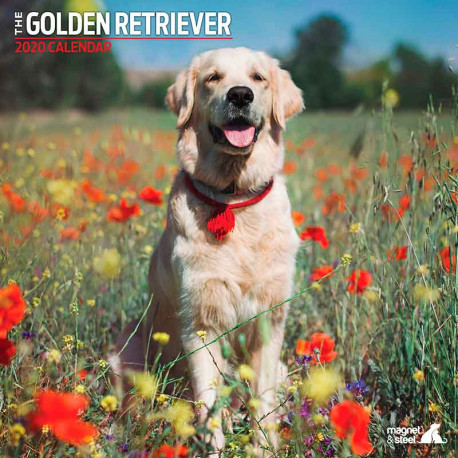 Calendario Golden Retriever 2019