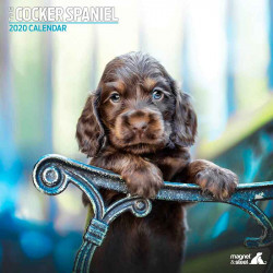 Calendario Deluxe Raza Cocker Spaniel 2019