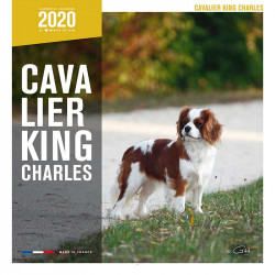 Calendario Cavalier King Charles 2020