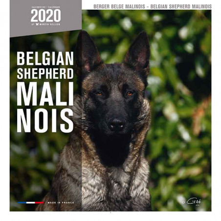 Calendario Belgian Shepherd 2020