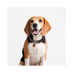 Collar Chewbacca Oficial para Perro