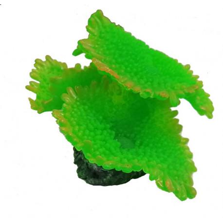 Coral Blando Champiñon Para Acuarios