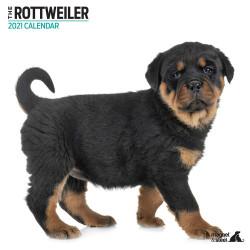 Calendario Rottweiler 2021