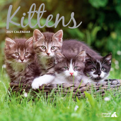Calendario de Gatitos...
