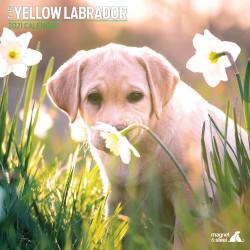 Calendario Labrador 2021
