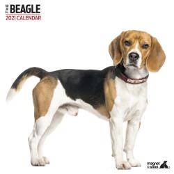 Calendario Beagle 2021