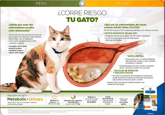 Hill's Feline Metabolic + Urinary