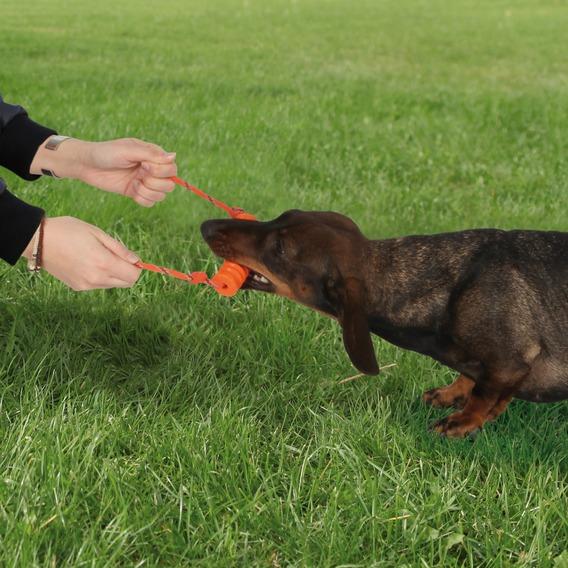 Dog Activity Lanzador Long-Mot