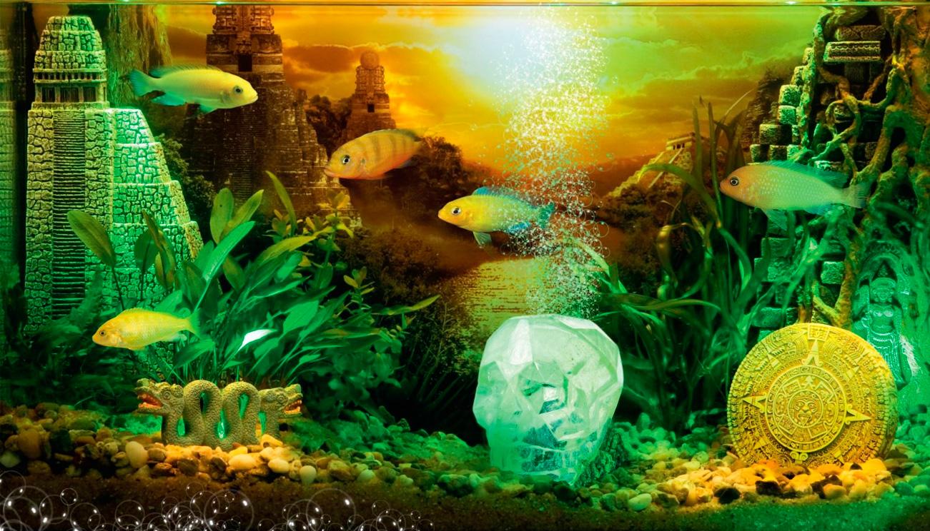 Calavera De Cristal Decoración Acuario