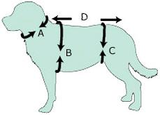 medidas-perros.jpg