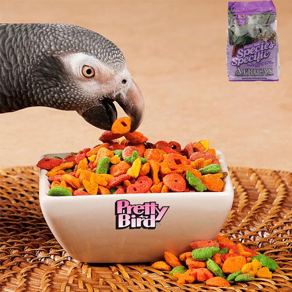 Pretty Bird African Special Loro Gris o Yaco
