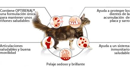 Proplan Gatos Adultos Salmón