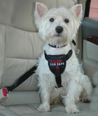 Clix Car Safe Arnés de Seguridad para Perros