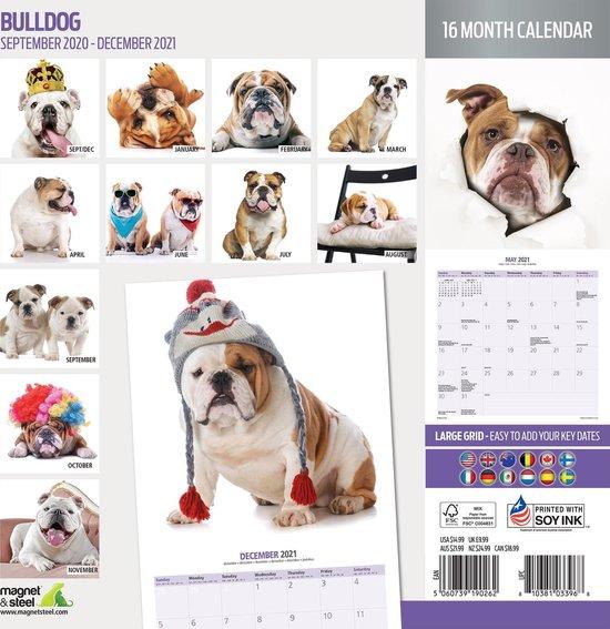 Calendario bulldog 2021.jpg