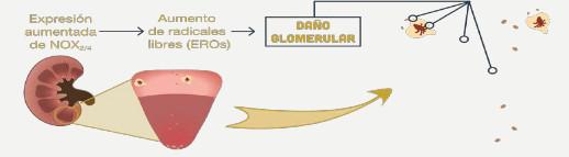 Renum cápsulas que ayudan a la función renal