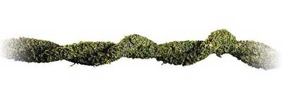 Enredadera-liana-musgo-terrario-reptiles