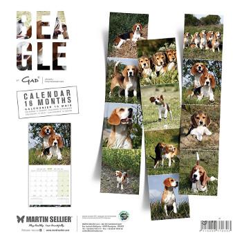 Calendario Beagle 2018