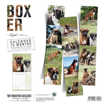 Calendario Boxer 2018