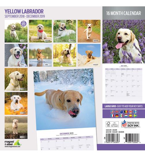 Calendario Labrador 2019
