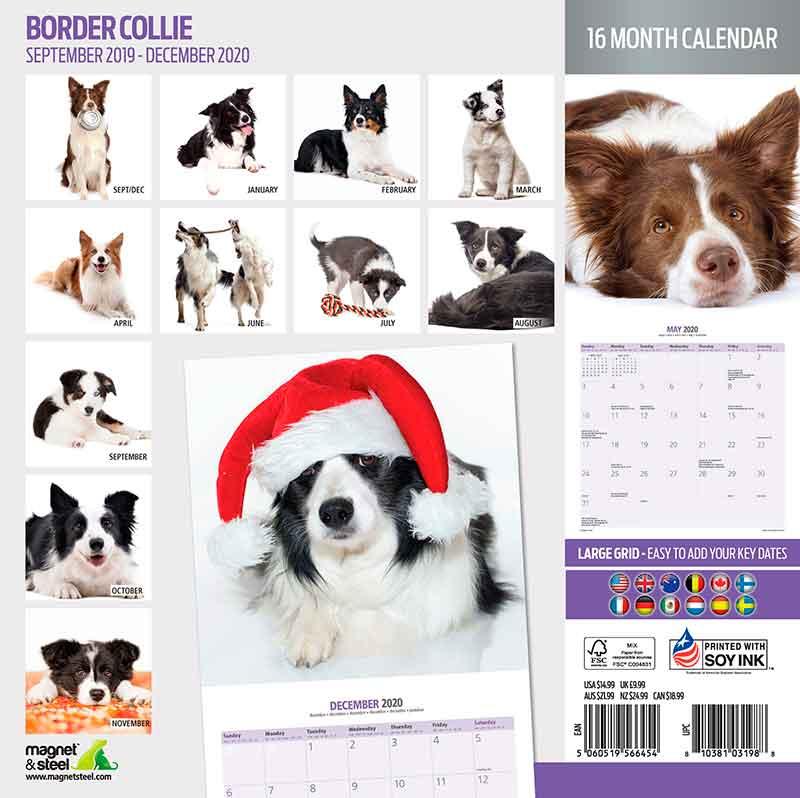 Calendario Border Collie 2020